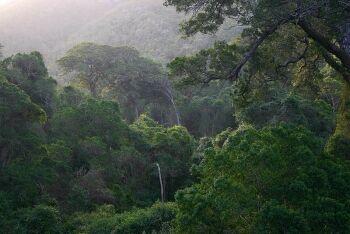 Knysna Forest, Knysna elephant, Garden Route, Western Cape